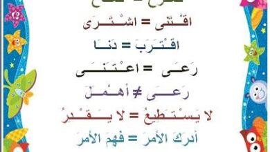Photo of مرادفات لغة عربية مستوى السنة الثانية و الثالثة ابتدائي