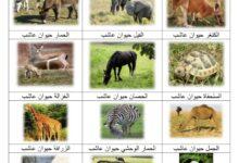 صورة الحيوانات العاشبة ( صور)