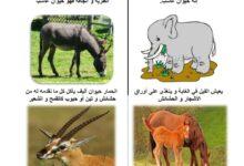 Photo of الحيوانات العاشبة ( صور 2 )