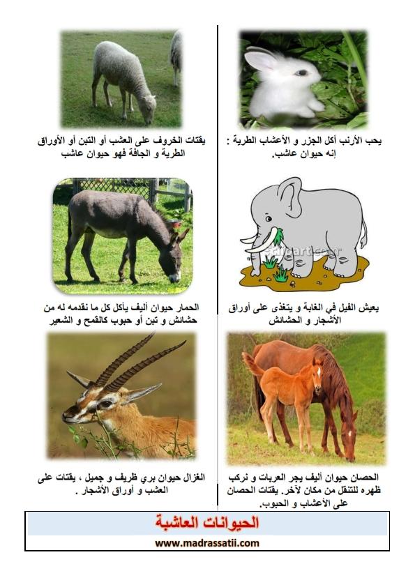 الحيوانات العاشبة موقع مدرستي كوم_001