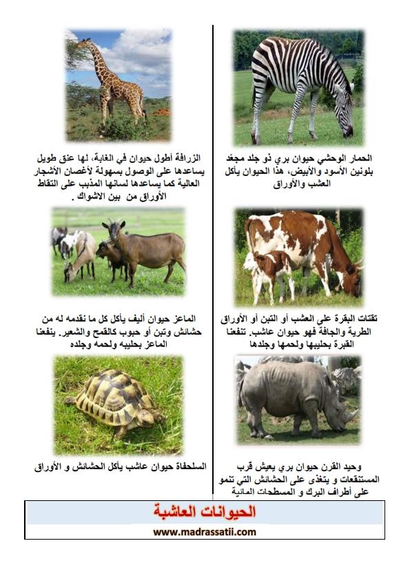 الحيوانات العاشبة موقع مدرستي كوم_002