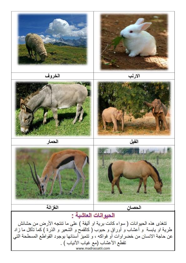 الحيوانات العاشبة 2 موقع مدرستي كوم_001