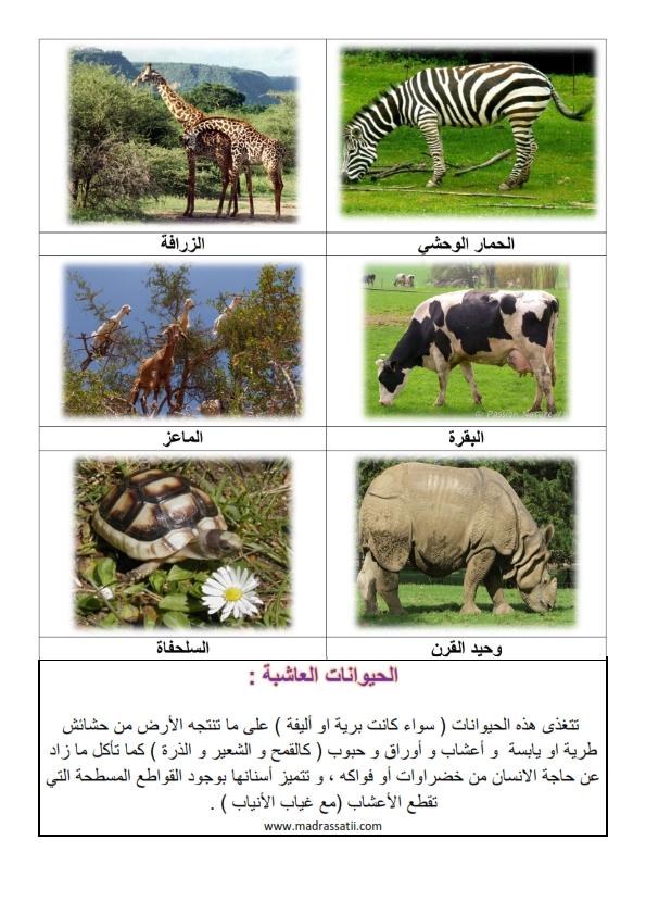 الحيوانات العاشبة 2 موقع مدرستي كوم_002