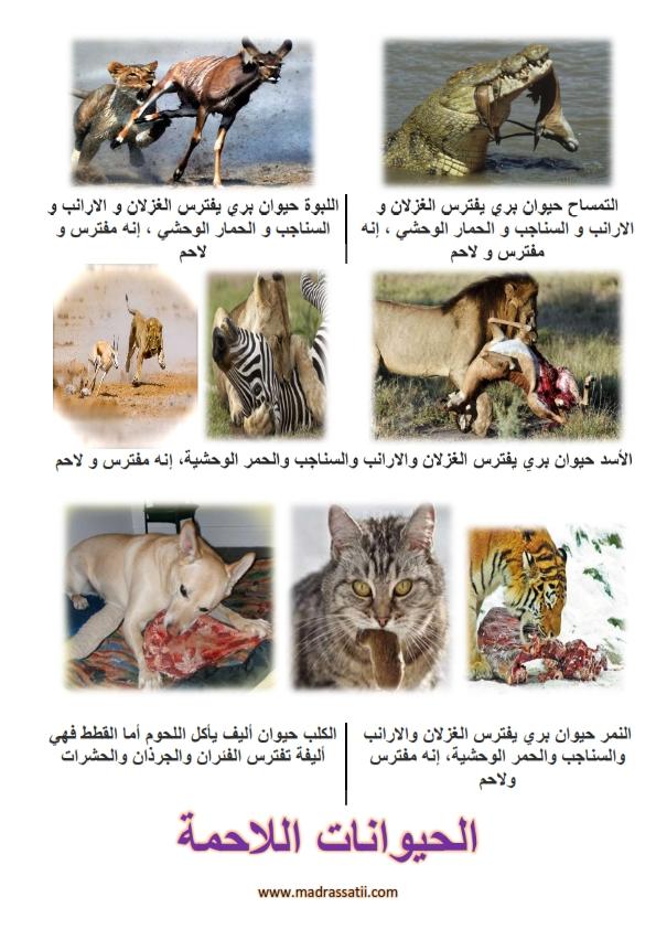 Photo of الحيوانات اللاحمة