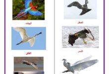 صورة الطيور التي تطير – التنقل طيرانا