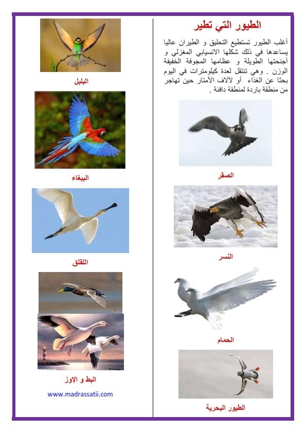 الطيور التي تطير موقع مدرستي كوم_001