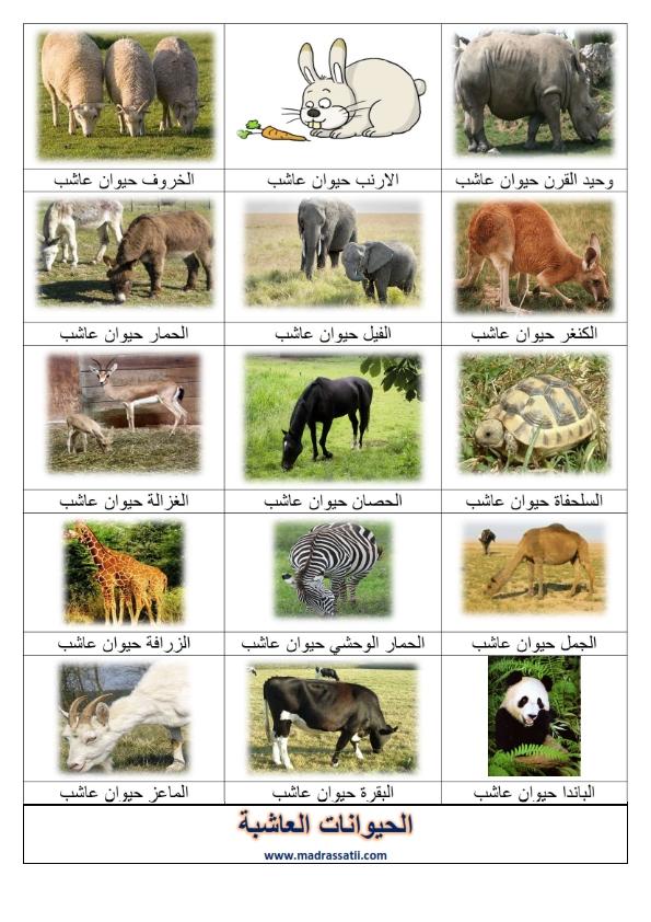 الحيوانات العاشبة صور موقع مدرستي كوم_001