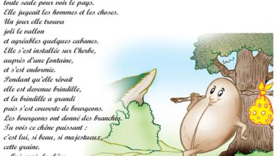 Photo of Poème une graine voyageait livre de lecture 6 ème