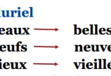 Photo of les adjectifs masculins et féminins