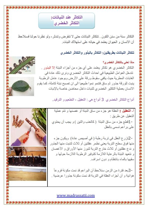 التكاثر عند النباتات التكاثر الخضري موقع مدرستي كوم_001