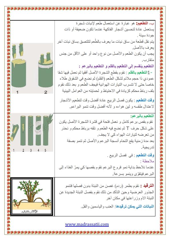 التكاثر عند النباتات التكاثر الخضري موقع مدرستي كوم_002