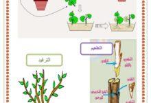 Photo of التكاثر عند النباتات : أنواع التكاثر الخضري : التعقيل و التطعيم و الترقيد