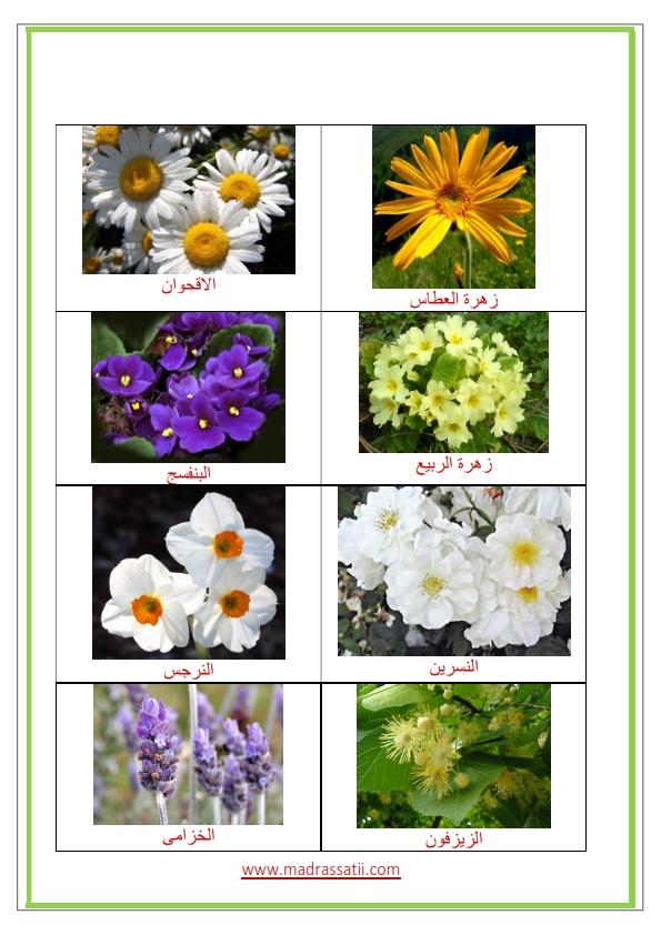 Azhar-types-des-fleurs-et-leurs-utilités_005