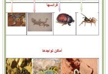 صورة العقرب : تغذيتها ، أماكن تواجدها ، خطرها و كيفية اسعاف الملدوغ