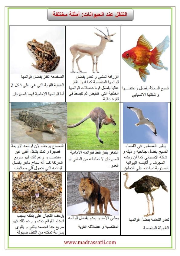attana9ol 3enda alhayawanet amthila madrassatii com_001
