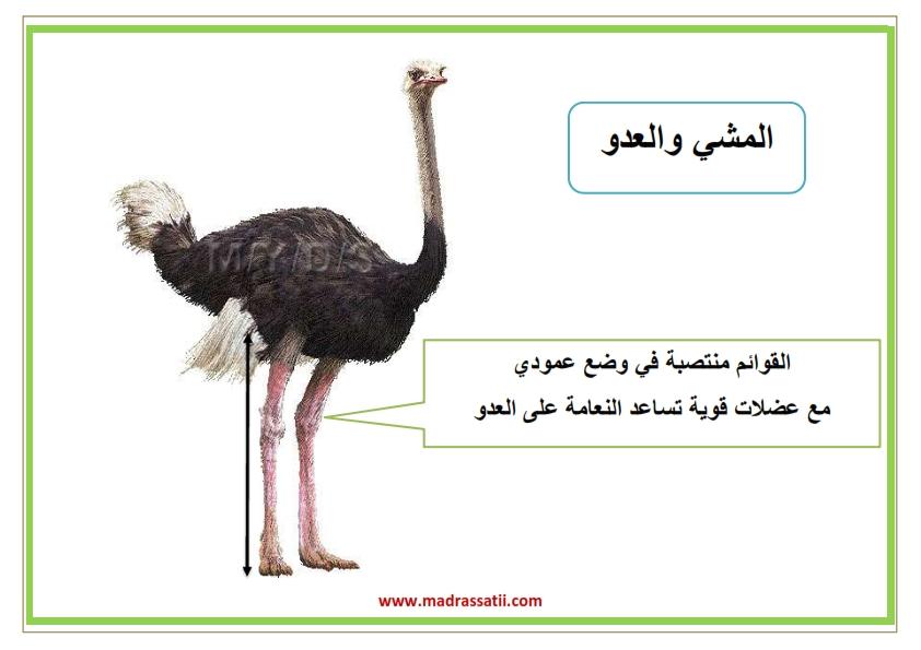 attana9ol filbar souar madrassatii_002