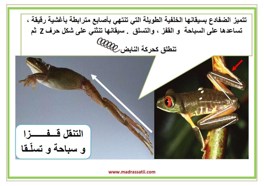 attana9ol filbar souar madrassatii_004