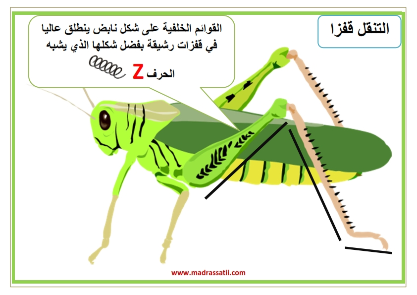 attana9ol filbar souar madrassatii_005