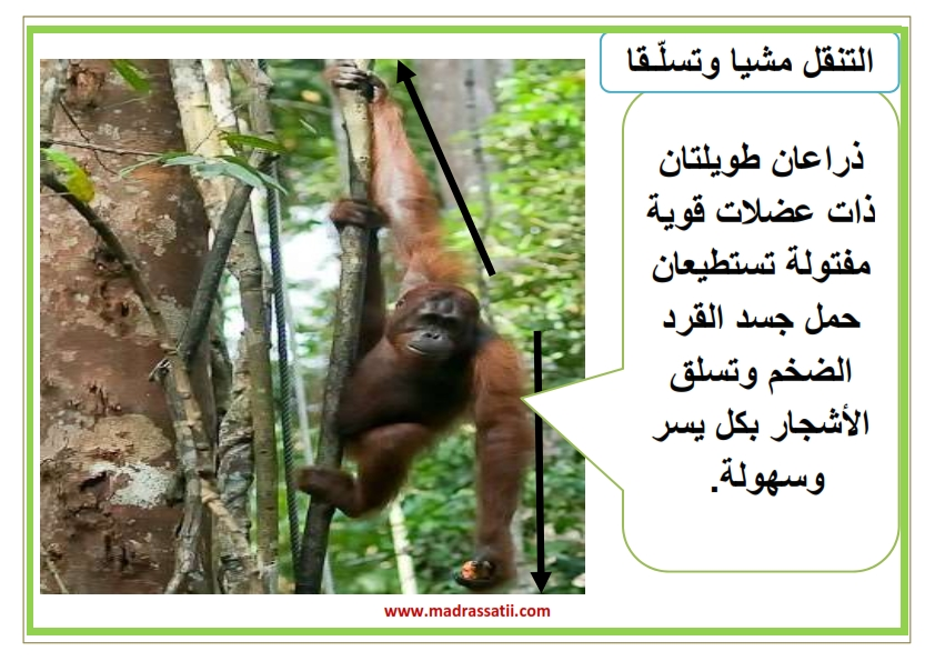 attana9ol filbar souar madrassatii_006