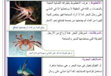 Photo of التنقل عند الحيوانات في الماء : التنقل سباحة