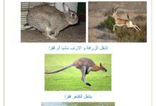 Photo of التنقل عند الحيوانات : التنقل في البر