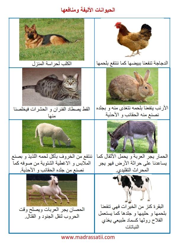 menefe3 alhayawanet alalifa madrassatii com_001
