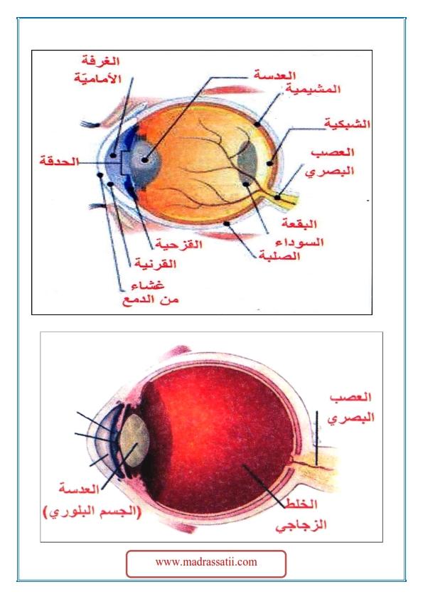 3ajeyb al3ayn madrassatii com_003