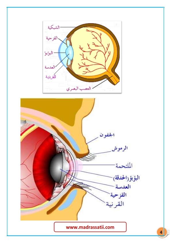 tarkibat al3ayn madrassatii com_004