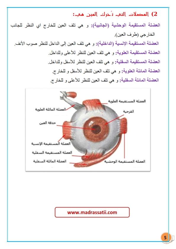 tarkibat al3ayn madrassatii com_005