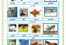 صورة معلقات : التنقل عند الحيوانات : السباحة و المقفز و الطيران و المشي و العدو