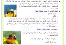 Photo of النحل و العسل : كيف يصنع النحل العسل ؟