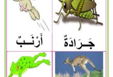 صورة معلقات : الحيوانات التي تتنقل قفزا