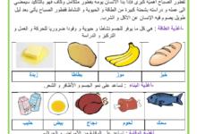 Photo of التغذية عند الانسان