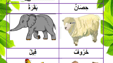 Photo of حيوانات تتنقل عدوا ، قفزا ، سباحة ، طيرانا و مشيا