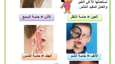 Photo of الحواس الخمسة – تحضيري –