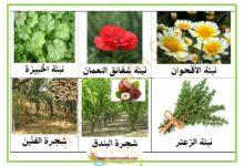 Photo of صور النباتات التلقائية