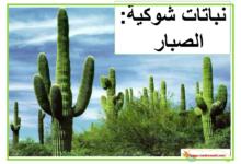 Photo of نص لا أرضى بغير وطني بديلا (1)