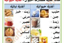 Photo of مصادر الأغذية : الأغذية النباتية و الأغذية الحيوانية