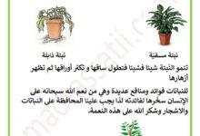 Photo of مظاهر نمو النبتة