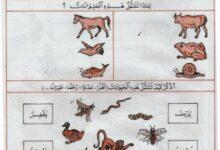 صورة تمارين حول التنقل عند الانسان و الحيوان ( السنة الاولى )