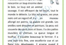 Photo of description du loup