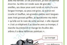 صورة description de l'éléphant