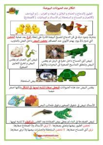 تحميل اصوات الحيوانات mp3