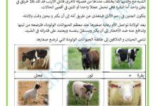 Photo of التكاثر عند الحيوانات الولودة – عائلات الحيوانات
