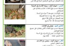 Photo of التكاثر عند الحيوانات الولودة : مدة الحمل
