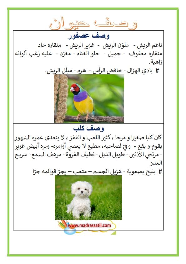 b6a0a82ef وصف حيوان : وصف عصفور ، وصف كلب ، وصف حمار، وصف غزال – موقع مدرستي
