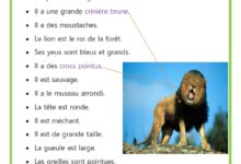 Photo of Description du lion