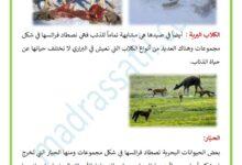 Photo of الحيوانات التي تصطاد بالمطاردة و كيفية استهلاكها غذائها – الاصطياد بالمطاردة الجماعية