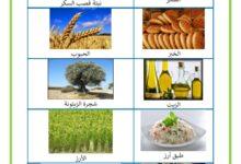 صورة مصادر الاغذية النباتية و الحيوانية – الغذاء و مصدره