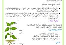 Photo of تركيبة النبتة –  مكونات النبتة  –  أجزاء النبتة